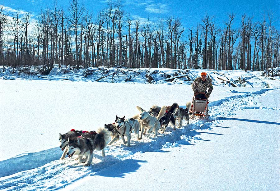 DogMushing (c) Destination BC