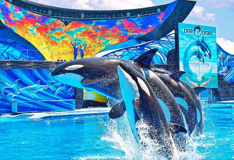 SeaWorld Orlando - One Ocean Show (c) SeaWorld Parks & Entertainment