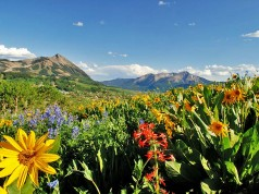 Crested Butte Wildflower Festival (c) Colorado TO