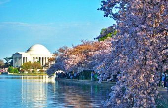 Cherry Blossom (c) National Cherry Blossol Festival