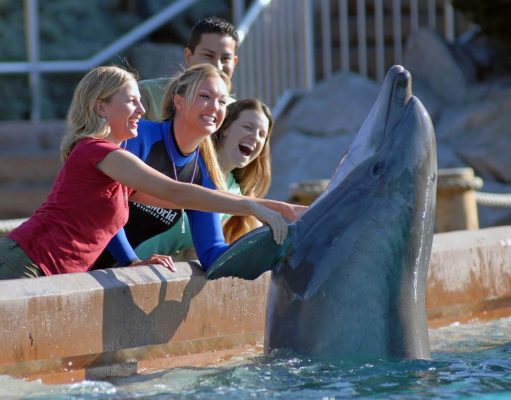 SeaWorld San Diego (c) SeaWorld Parks & Entertainment